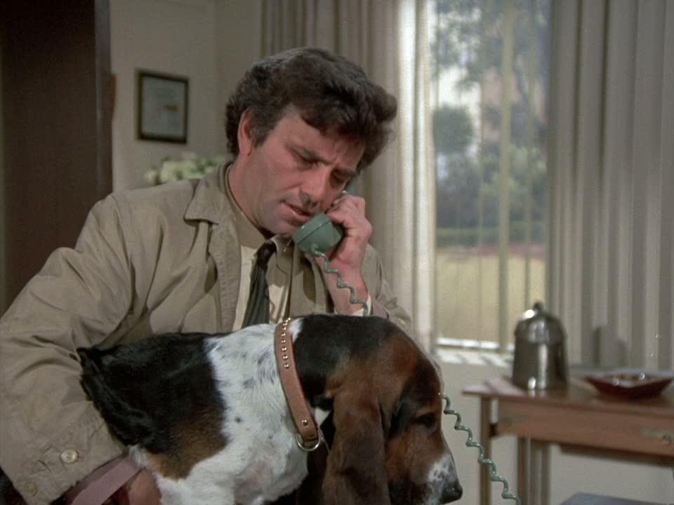 Columbo dog - Pixdaus
