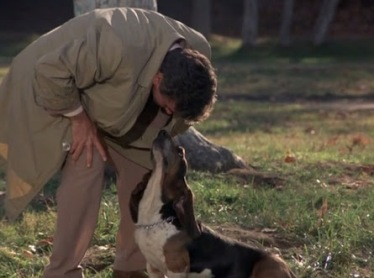 columbo and dog 8